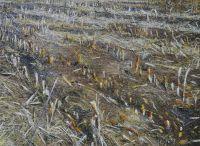 'KLEINHÖFLEIN I', 110x150, Öl auf Leinen, 2001